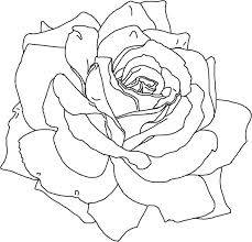 find   adult coloring pages